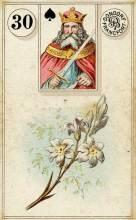 Lenormand Card 30 Lily Meaning & Combinations