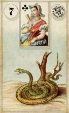 Lenormand Card 7 Snake Meaning & Combinations