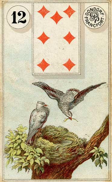 12.Birds